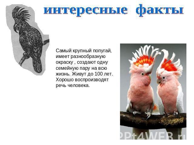https://alexsf.ru/my_img/img/2017/05/29/52f55.jpg